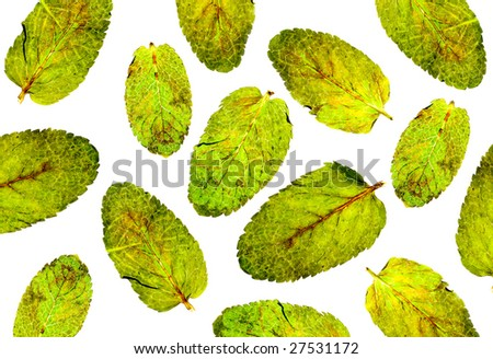 Leaves of mint on a white isolated
