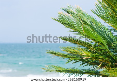 Leaves of palm tree - stock photo