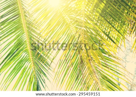 Leaves of Palm Trees in Sun Light, Background Toned under Retro. Travel design - stock photo
