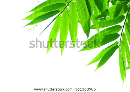 Leaves of the bamboo on white background. - stock photo