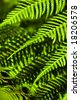 leaves of the fern - stock photo
