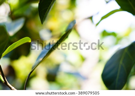 Leaves of tree background:blurred green foliage bokeh of forest backdrop:ideal use for background.