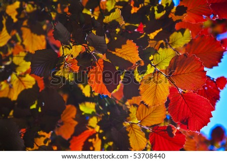 leaves of tree in intensive light - stock photo