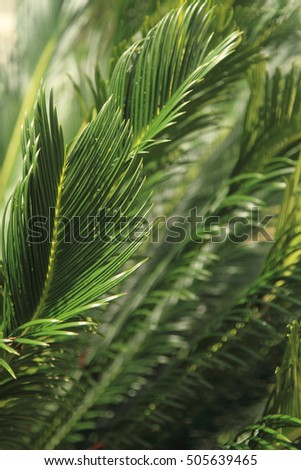 Leaves of tree, nature background
