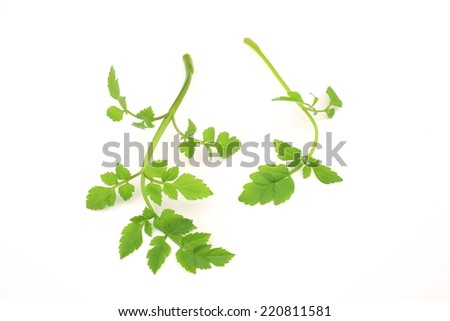 Leaves of wasabi