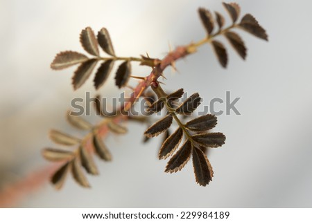 leaves of wild grass macro - stock photo