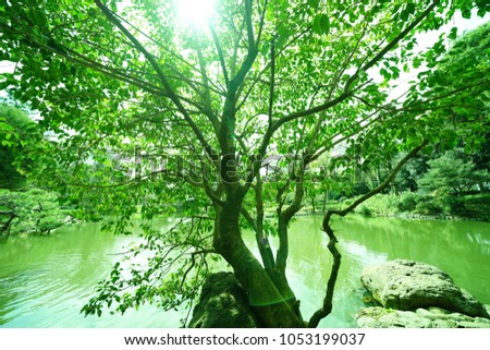 https://thumb7.shutterstock.com/display_pic_with_logo/167494286/1053199037/stock-photo-leaves-on-a-tree-in-the-park-with-the-sun-1053199037.jpg
