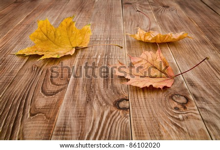 leaves on a wooden background - stock photo