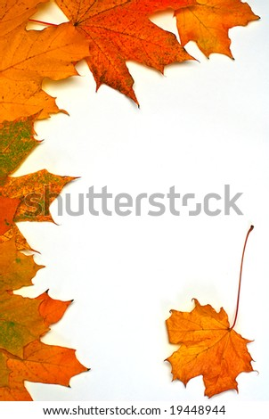 leaves on autumn isolated on white - stock photo