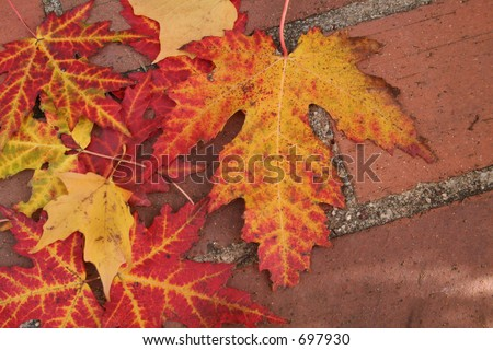 Leaves on brick porch - stock photo