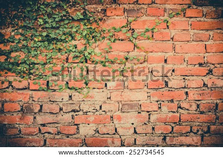 leaves on brick wall for wallpaper - stock photo