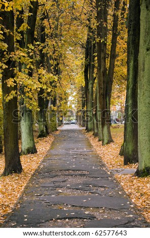 Leaves on street - stock photo