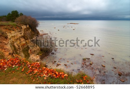 Leaves on the reef - stock photo