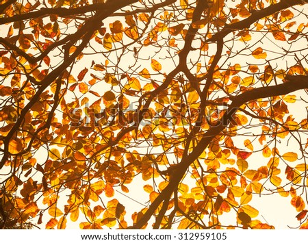 Leaves on the tree in warm light