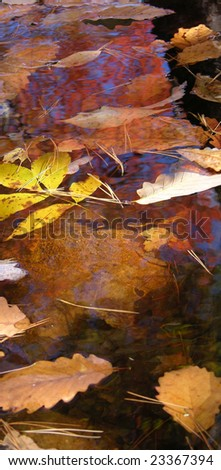 Leaves on the water during the fall