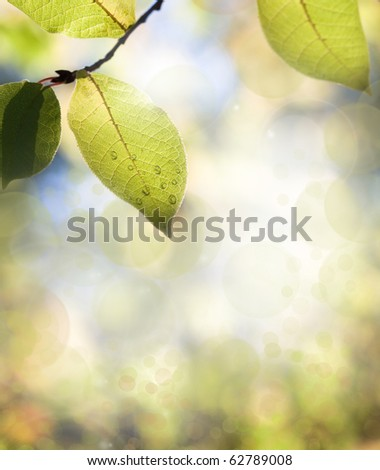 Leaves on tree with water drops against beautiful blurred background (very shallow depth of field) - stock photo