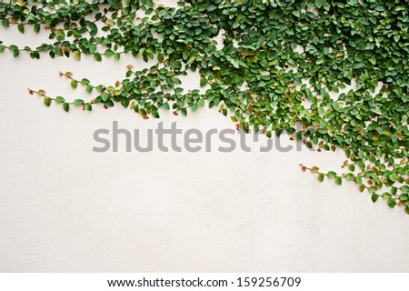 leaves on wall for wallpaper - stock photo