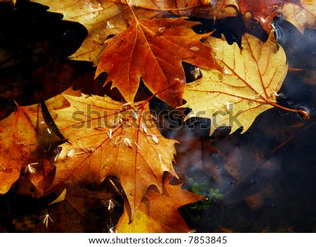 Leaves on water - stock photo