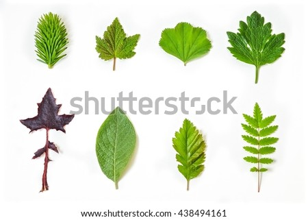 Leaves on white background. - stock photo