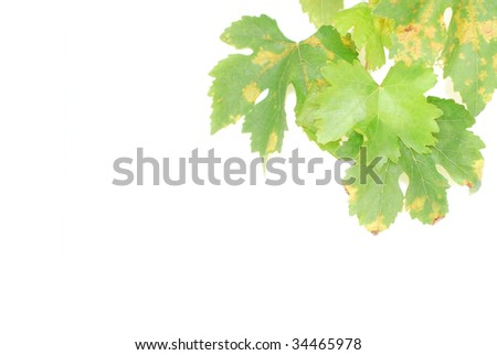 leaves over white - stock photo