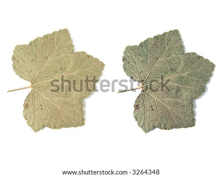 leaves over white background - stock photo