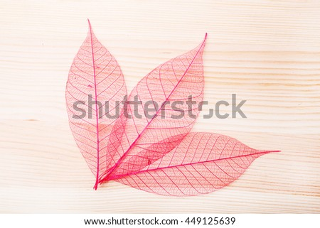 Leaves over wooden background.With copy space
