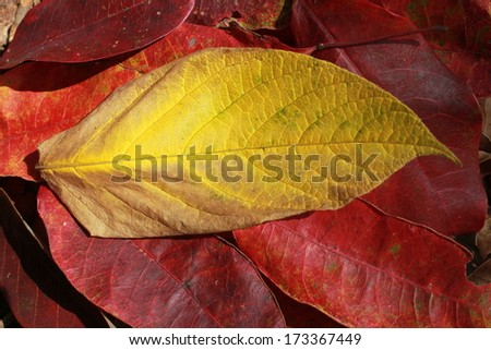leaves pattern on the background