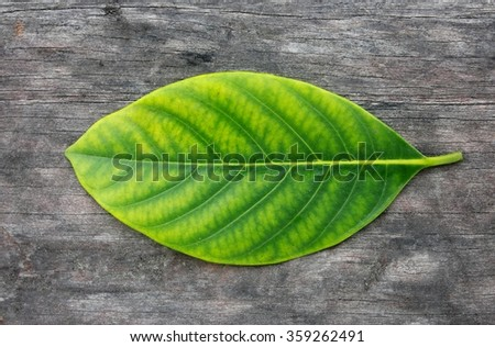 Leaves pattern on the nature - stock photo
