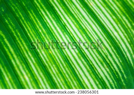 leaves pattern, textures of fern, green leave - stock photo