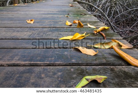 Leaves placed on a wooden bridge in the mangroves. Selective focus.