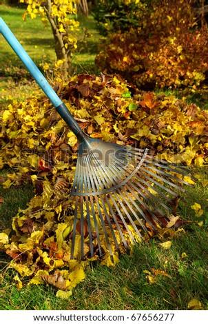 leaves rake - stock photo
