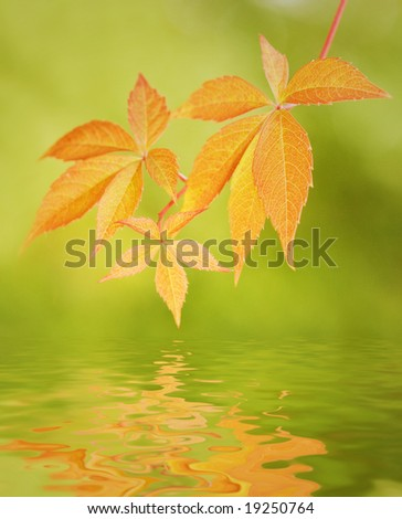 Leaves reflected in water - stock photo