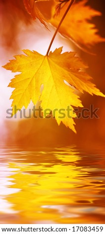 leaves reflecting in the water, shallow focus - stock photo