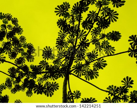 Leaves silhouette pattern - stock photo