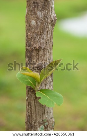 Leaves sprout from tree