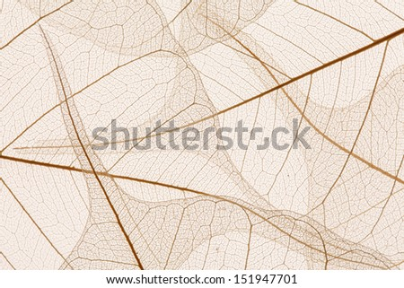 Leaves texture - stock photo