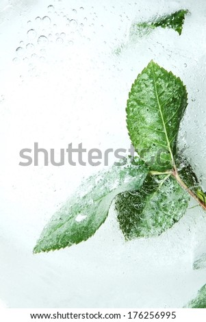leaves trapped in a ice block - stock photo