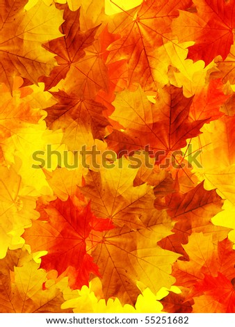 Leaves  tree  maple - stock photo