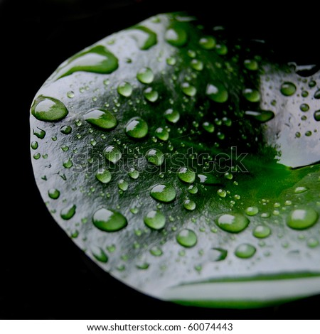 Leaves, water drops - stock photo