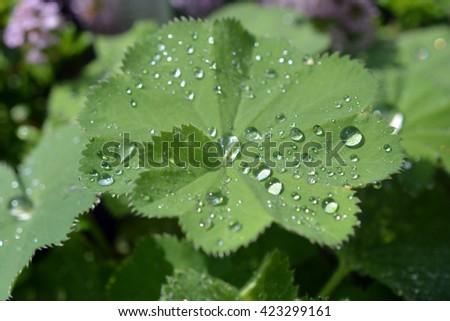 Leaves wet - stock photo
