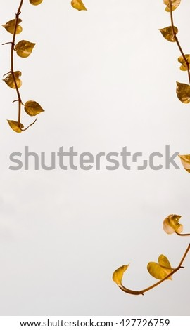Leaves white and orange color, leaves background pattern, abstract beauty background. Background of leaves, summer or spring season. gray leave. - stock photo