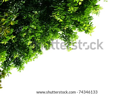 leaves with isolated background - stock photo