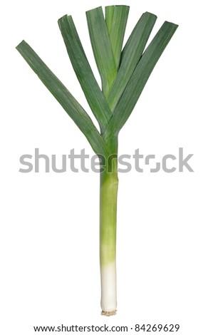 Leek isolated on white background - stock photo