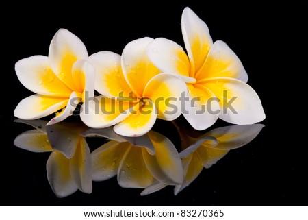 Leelawadee flower and its reflecion on black background - stock photo