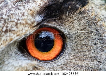 left eye of eagle owl very close up with small depth of field - stock photo