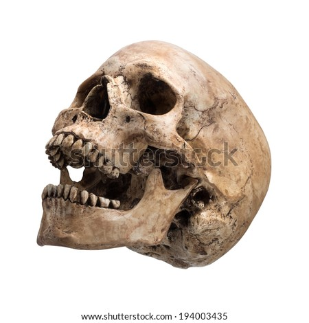 Left side view of human skull open mouth on isolated white background - stock photo