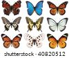 left to right: peacock butterfly (Vanessa io), blue morpho, monarch (Danaus plexippus), tiger swallowtail (Papilio glaucus), swallowtail (Papilio machaon), black veined white (Aporia crataegi), apollo - stock photo