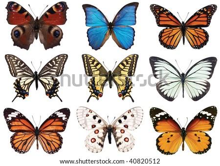 left to right: peacock butterfly (Vanessa io), blue morpho, monarch (Danaus plexippus), tiger swallowtail (Papilio glaucus), swallowtail (Papilio machaon), black veined white (Aporia crataegi), apollo - stock photo