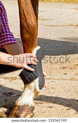 Leg guard of a horse - stock photo
