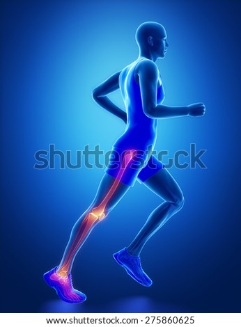 Leg joint anatomy - stock photo